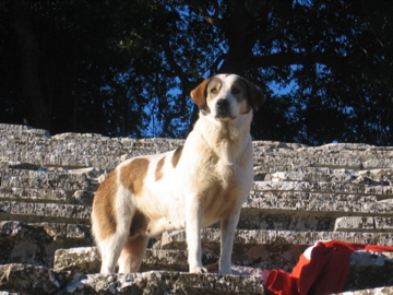 CanineEscort